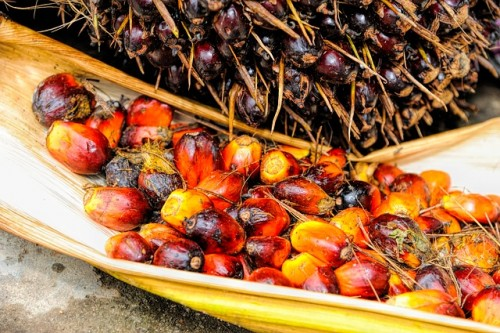 Palm Oil Production Goes Remote